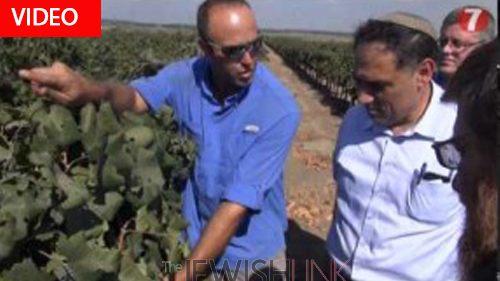 Israel Prepares for Shmita Year